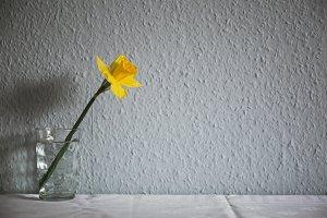 Daffodil in a glass