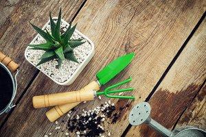 Succulent and mini garden tools.