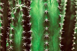 Closeup Of Cactus In Neon Green