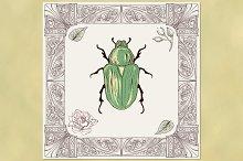 Rose Chafer Beetle and Ornate Frame