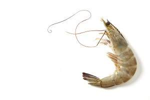 Fresh raw seafood shrimp