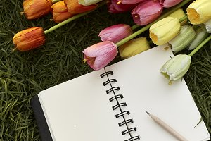 Colorful Tulips with Blank Note. And