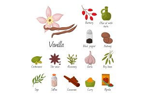 Spices condiments and seasoning food herbs decorative healthy organic relish flavouring vegetable vector illustration.