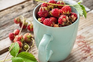 Gathered wild strawberries in a cera
