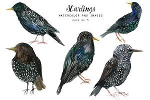 Watercolor birds clipart - Starlings