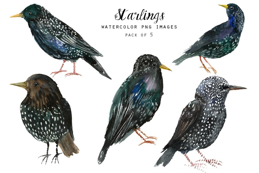 Watercolor Birds Clipart Starlings Illustrations Creative Market