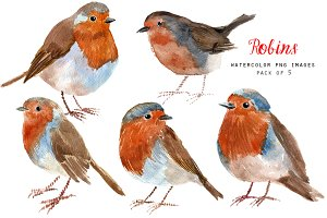 Watercolor robins - bird clipart