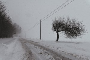 Winter Road with Snow and Trees