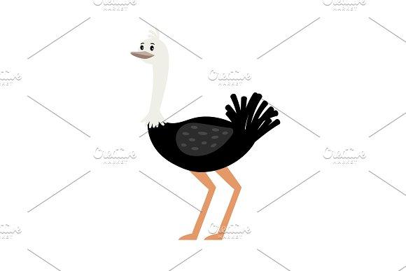 Ostrich Cartoon Bird