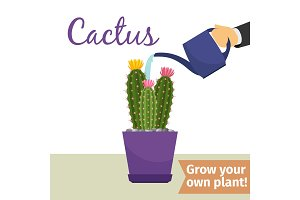 Hand watering cactus plant