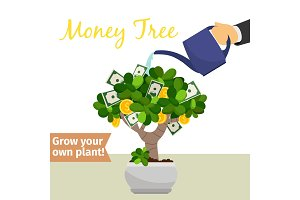 Hand watering money tree