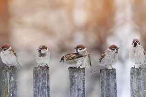 funny birds on the fence