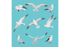 Set illustrations of atlantic seagulls in cartoon style. Pictures of birds in different poses