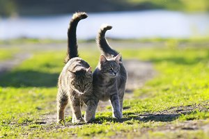 two cat lovers walking on the grass