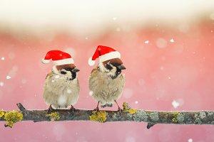 две птички в новогодних колпаках