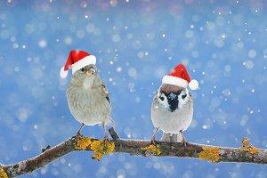 две птицы в праздничных шапках