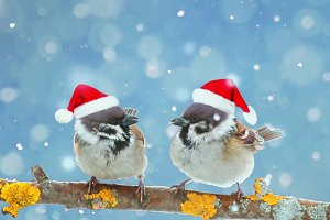 открытка две новогодние птицы