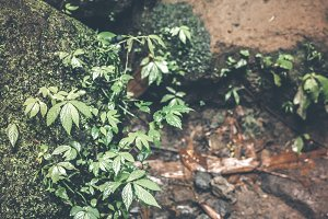 Deep in the asian rainforest. Tropical nature.