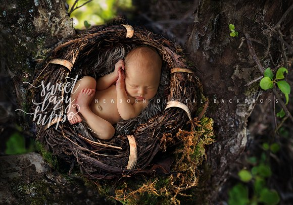 Newborn Nest Backdrop
