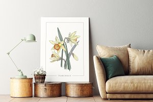 Poster with Narcissus Watercolor