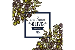Vector frame with place for text anf hand drawn colored olive branches in corners background