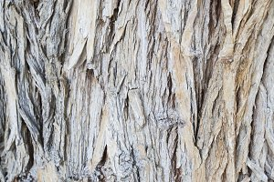 Aged Wood Texture on Old Tree Backgr