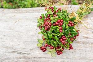 Ripe wild lingonberries