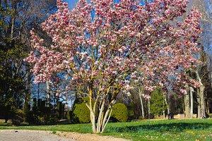 spring in park(vertical)