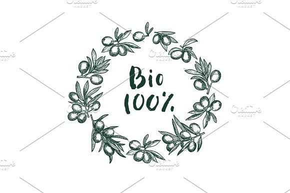 Vector Hand Drawn Olive Branches