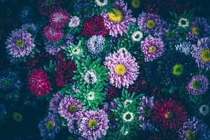 Dark multicolor asters