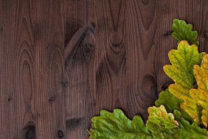 Beautiful oak leaves on wooden