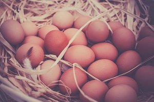 Basket of organic eggs