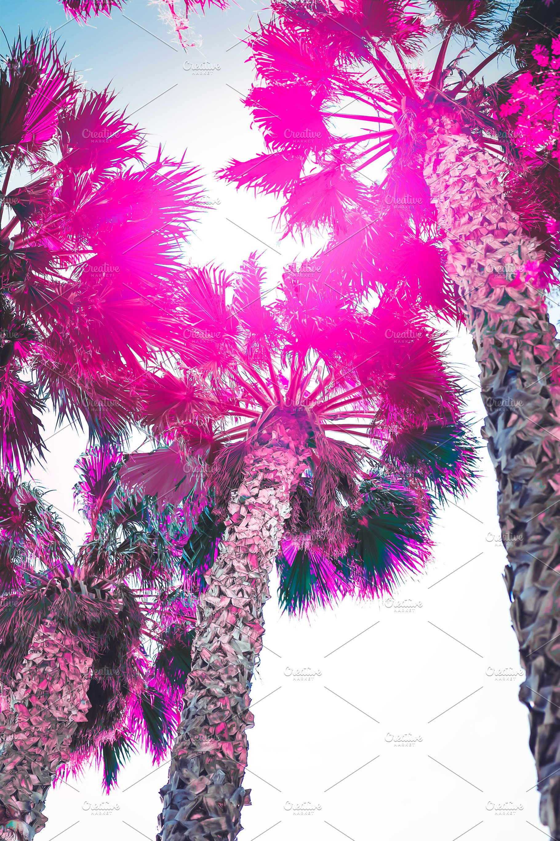 Palm Trees Surreal Colors Hot Pink High Quality Nature Stock