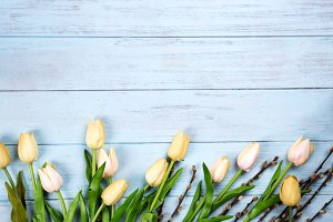 border of spring tulips with branches of the seal on blue wooden background