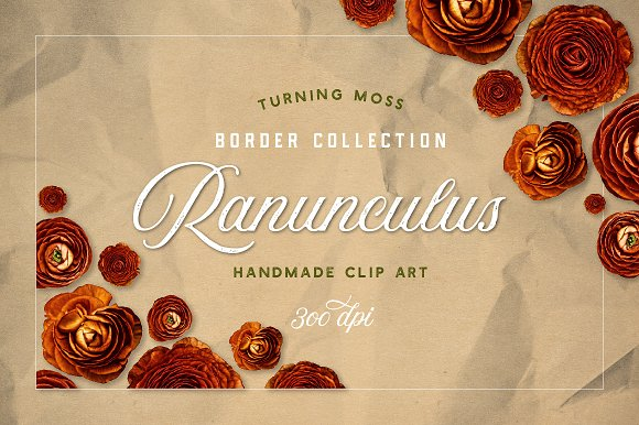 Ranunculus Borders and ClipArt