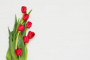 Row of tulips on white background with space for message. Mother's Day background. Top view