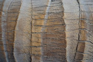 Closeup of a palm tree trunk, ideal for a background texture
