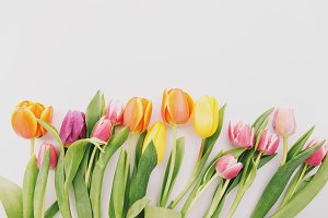 Different colorful tulips on grey