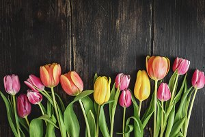 Beautiful tulips on wood