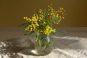 Bouquet of Mimosa in a vase