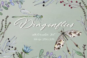 DRAGONFLIES. Watercolor clipart