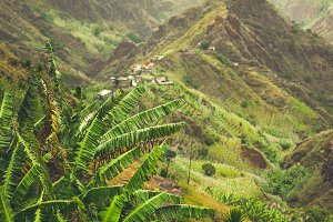 Banana plantation in Xo-Xo valley. Trekking route 202 lead between harsh peaks of the mountains along the valley. Santo Antao island, Cape Verde