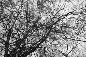 Black and white tree branches