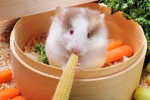 Yummy eat baby corn