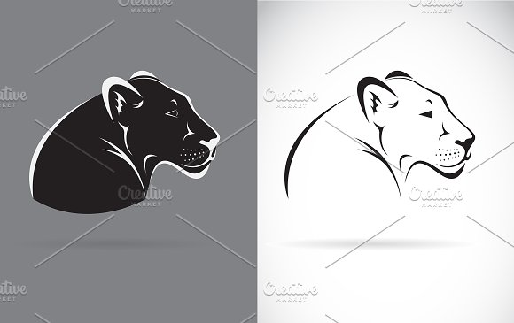 Vector Of Black Panther Wild Animal
