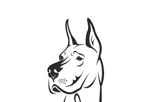 Vector of a dog head.(Great Dane)