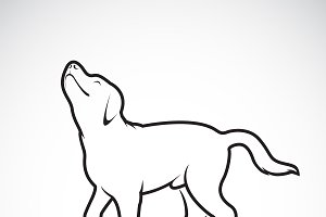 Vector of a dog labrador.Pet.Animal.