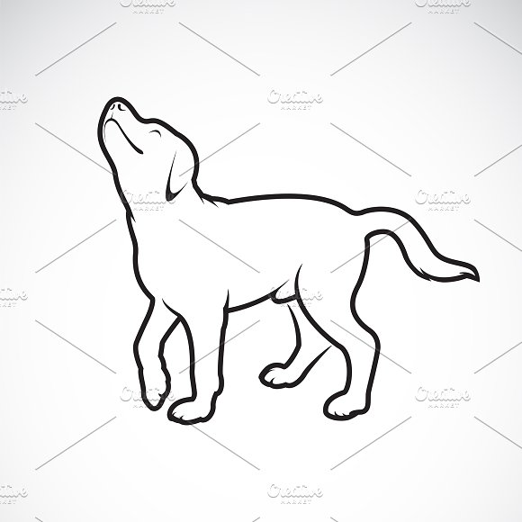 Vector Of A Dog Labrador.Pet.Animal