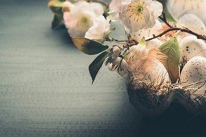 Eggs in carton box with blossom