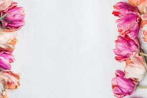 Floral banner with pink tulips